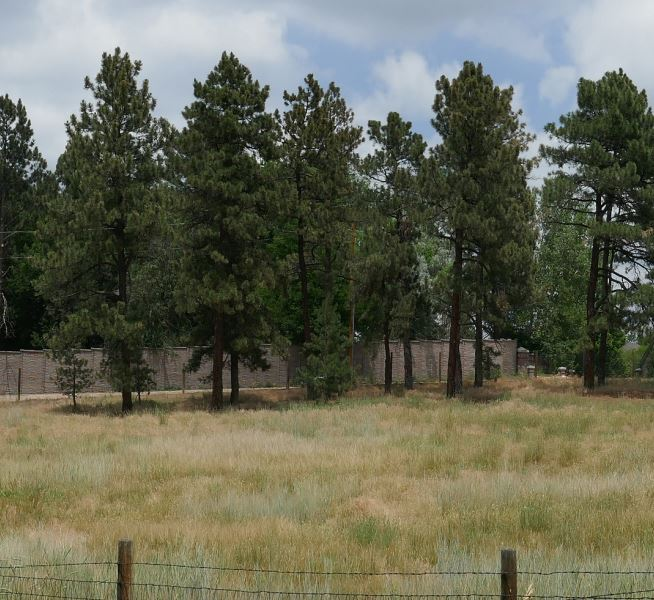 long pine grove cropped